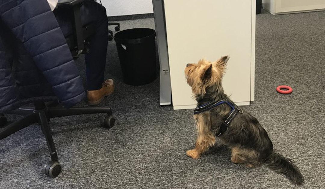 Mehr Hund oder Katze. Weniger Stress im Büro.